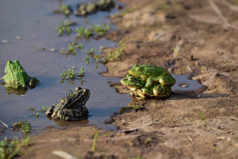 青蛙冤魂的报复